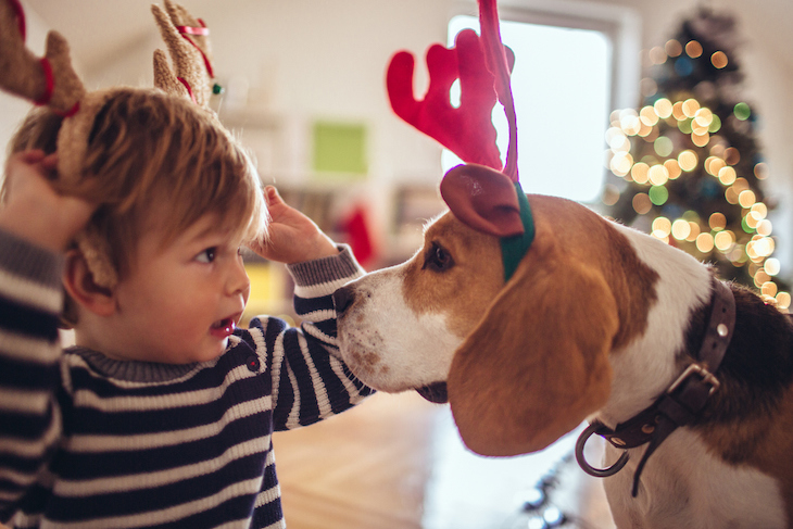 Beagle and Child Playing Wearing Reindeer Ears
