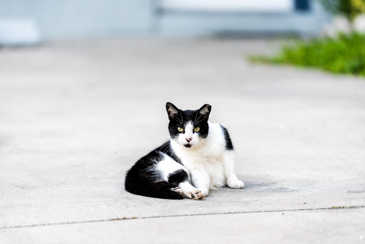 Bi-color black and white cat sitting on pavement