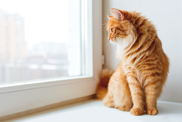 Ginger tabby cat perched on window sill
