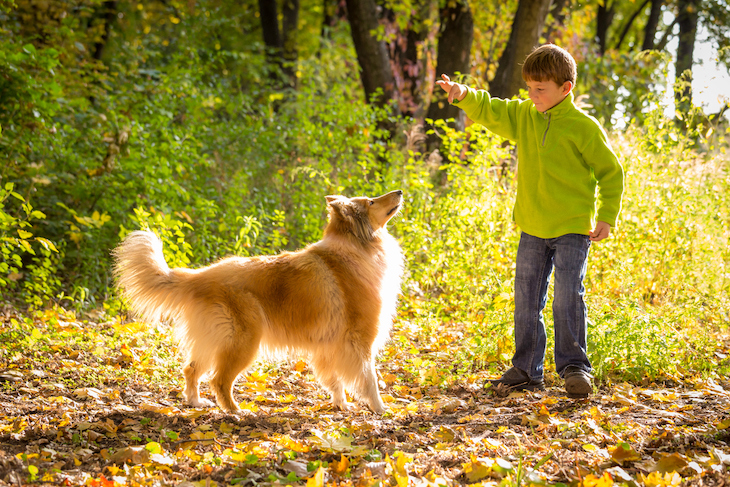 Collie Playing with Young Boy Outside