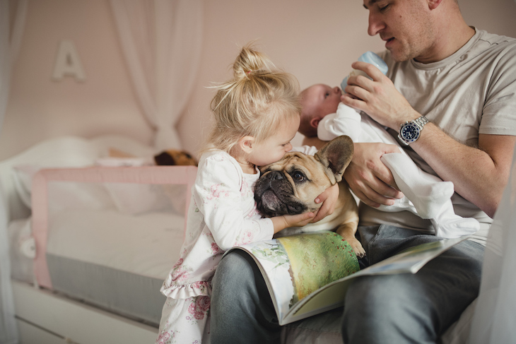 English Bulldog on feeding father's lap being hugged by toddler