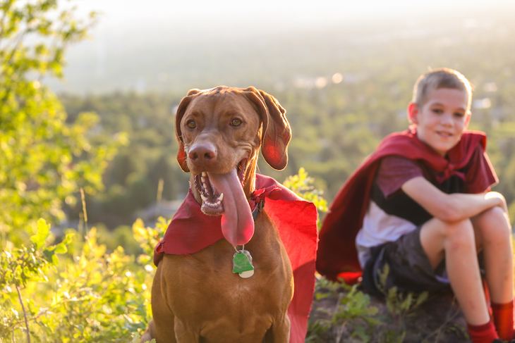 Vizsla dog and child dressed in superhero capes