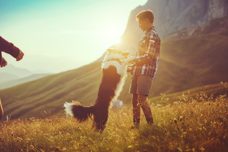Border Collie playing with boy on sunny mountainside