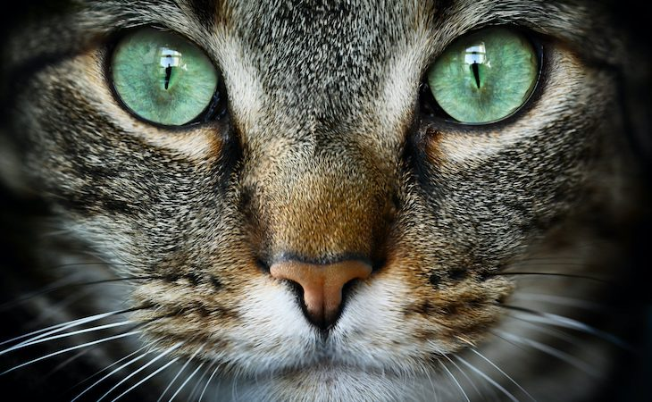Close up of green cat eyes