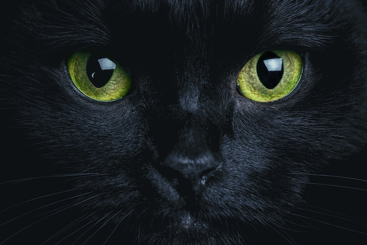 Close up of black cat's yellow eyes