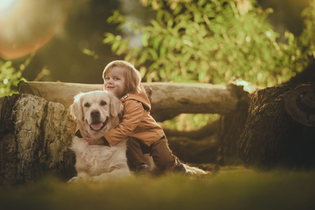 Child hugging a Golden Retriever