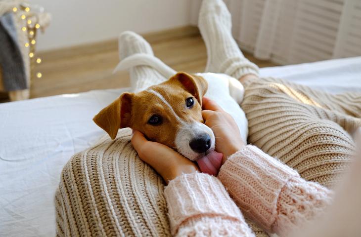 Understanding your dog's body language